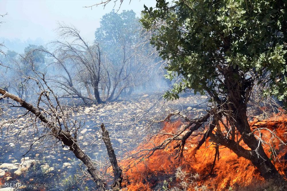آتشسوزی بیش از ۱۱ میلیون هکتار از جنگلهای کشور طی سه سال اخیر