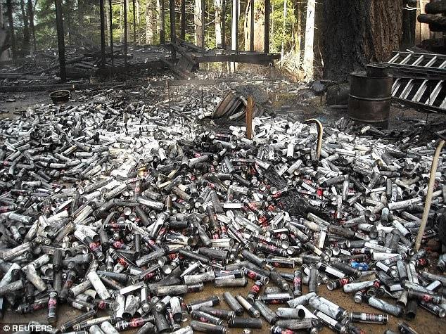 مصیبت مزارع ماریجوانا برای جنگلهای آمریکا