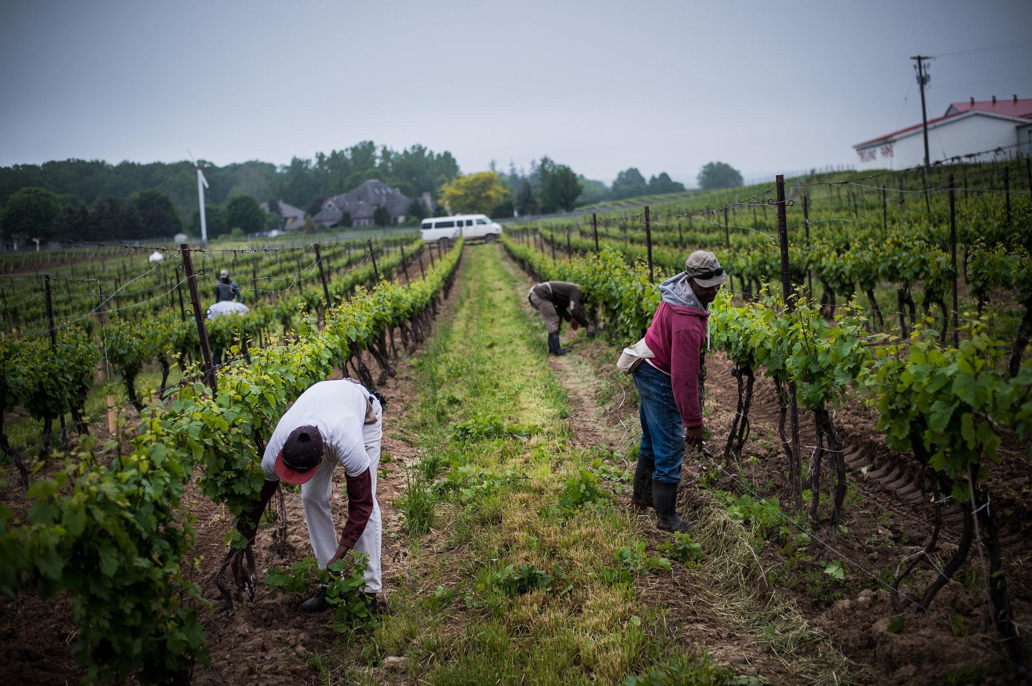 اخراج، دستمزد کارگران شاکی در مزارع کانادا