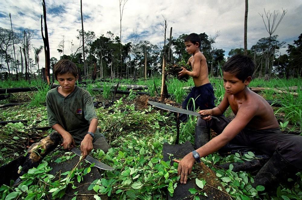 کلمبیا به دنبال جایگزینی برای کشت کوکا