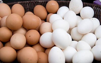 عذرخواهی رئیسجمهور  کرهجنوبی رسوایی تخممرغ