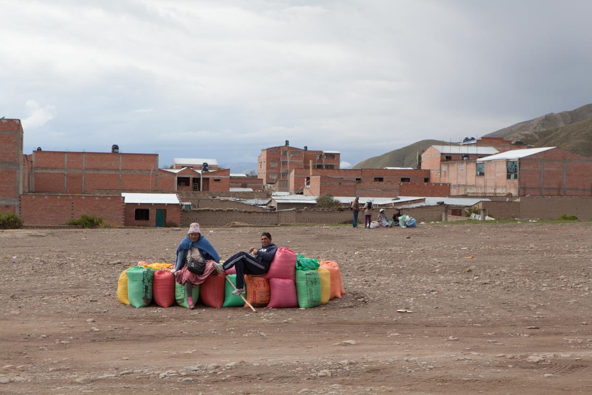 آغاز برداشت «کینوآ» ابَرغذای بولیویها