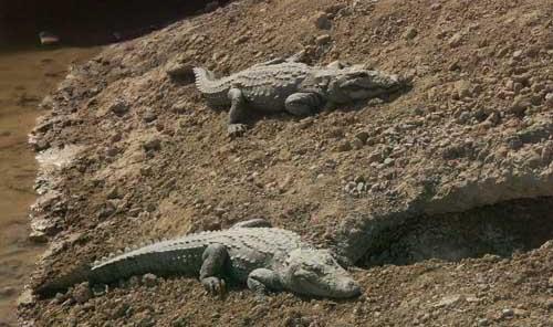 مرگ خاموش گونهها