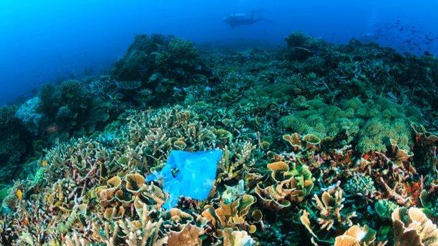 اثرات سوء تصمیم جدید ترامپ بر اکوسیستمهای دریایی