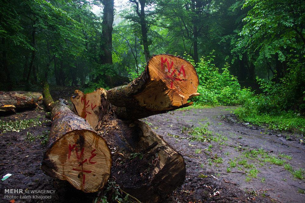 تهدید حیات جنگلهای شمال با هجوم پایتختنشینان برای ویلاسازی