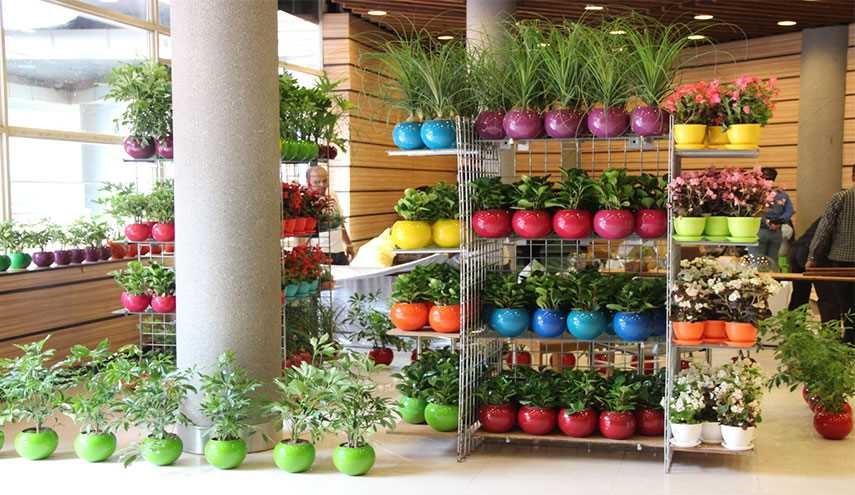 این 3 گیاه برای آپارتمان مناسب هستند