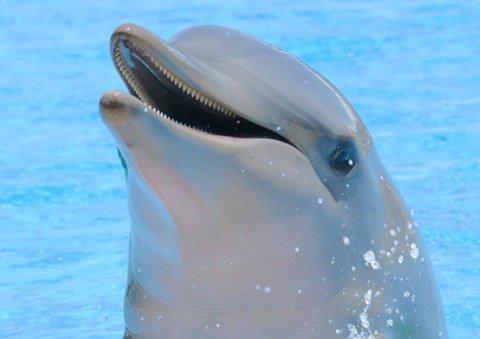 پلیس در تعقیب مردی که دلفین زنده را ربود