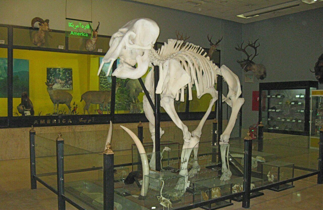 بازدید از موزه تنوع زیستی پردیسان را از دست ندهید