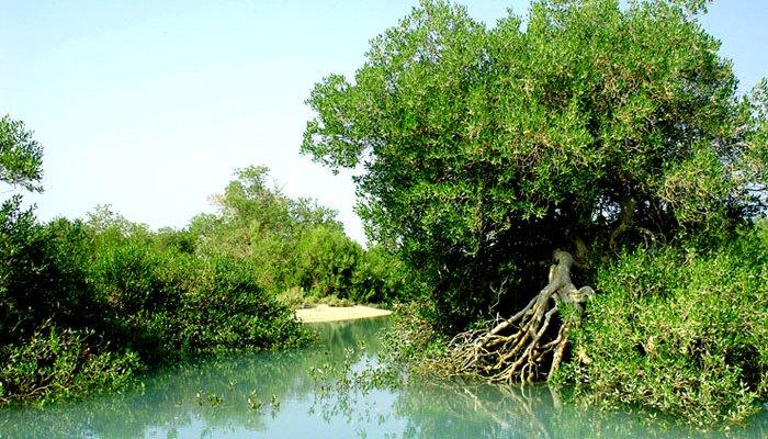 تصاویری از جنگلهای حرا در خلیج فارس