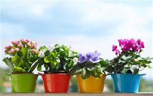 راهنمای انتخاب گلدان برای آپارتمان