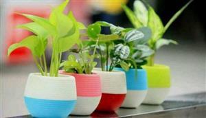 توصیههایی برای مراقبت از گیاهان در گرما