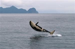 زیباترین عکسها از دنیای نهنگها