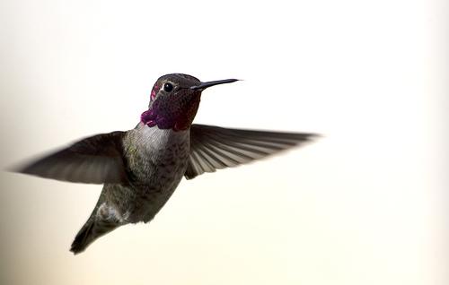 تصاویر استثنایی از پرواز پرندگان