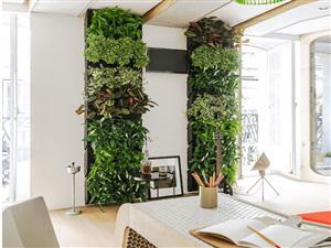 باغچههای دیواری  را چطور درست کنیم؟