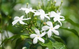 این گیاهان خواب راحت را به شما هدیه میدهند