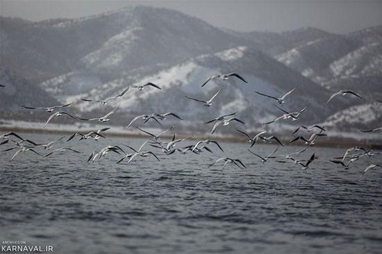 چرا و چگونه به دریاچه زریوار سفر کنیم؟