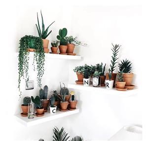 تمام فوت و فنهای ساختن زیباترین باغچه دیواری در خانه