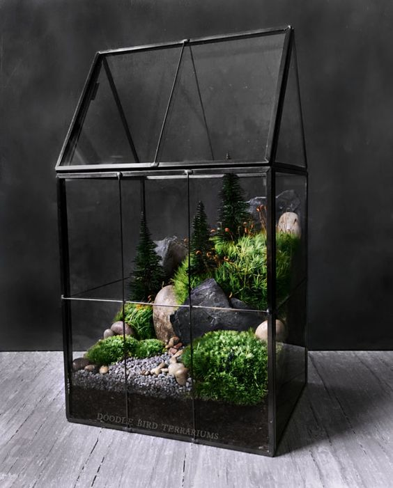 مجموعهای از زیباترین تراریوم ها؛ باغچههای شیشهای