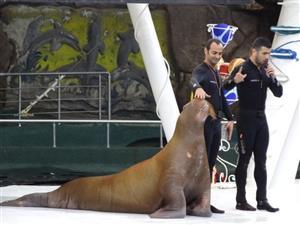 ببینید: اینجا پارک دلفینهای کیش