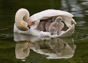 ببینید: غریزه مادری در حیات وحش