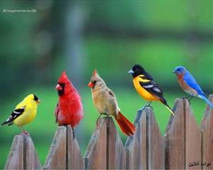 این پرندگان زیبا را ببینید