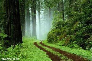 پارک جنگلی گیسوم در استان گیلان؛ حتما یک بار سفر کنید
