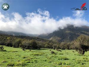 سفر به جنگل شاهزید و قله کله سر؛ تجربهای لذتبخش + گزارش تصویری