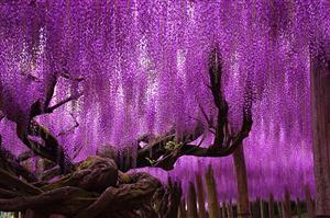 ببینید:زیباترین درختهای جهان