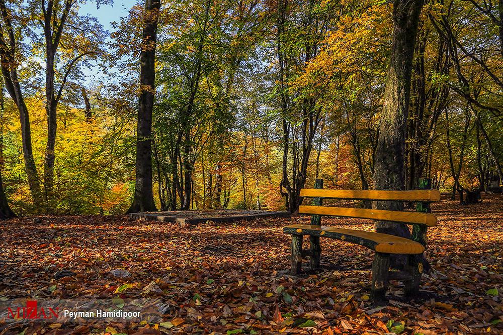 تصاویر بسیار زیبا از پاییز در جنگل گلستان
