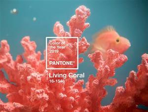 رنگ مرجانی زنده بهعنوان رنگ سال 2019 انتخاب شد