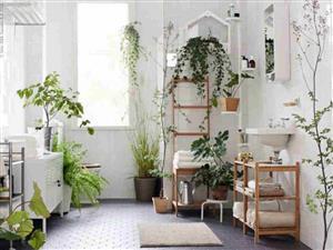 چه گیاهانی برای تزیین سرویس بهداشتی مناسب هستند؟