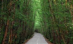 راهنمای کامل سفر به جنگل دالخانی معروف به دالان بهشت ایران در رامسر