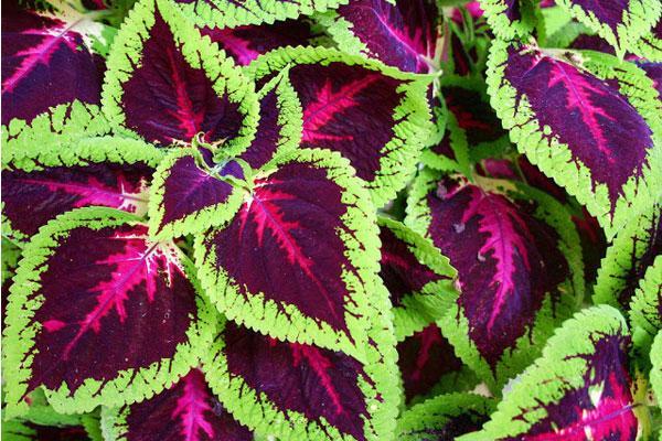 5 گل و گیاه مناسب برای نگهداری در آپارتمان