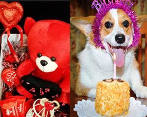 حضور خواننده معروف در تالار مجلل برای تولد سگ خانگی