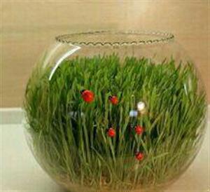 چگونه در تنگ سبزه هفت سین درست کنیم؟