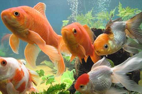 چگونه از ماهی قرمز سفره هفت سین عید نوروز نگهداری کنیم؟