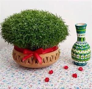 آموزش کامل کاشت سبزه هفت سین عید با انواع بذرهای مختلف