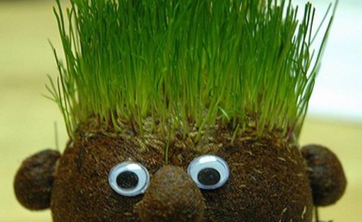روش کاشت و نگهداری انواع سبزه برای سفره هفت سین