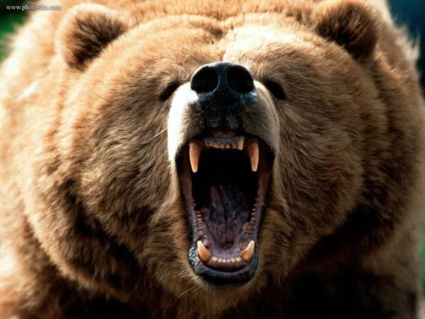 پایان تفریح لاکچری در جنگل گلستان با حمله خرس