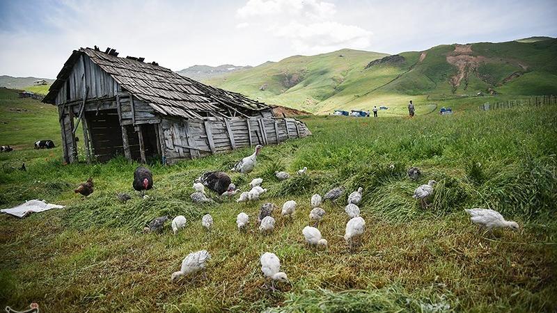 عکسهایی از طبیعت بینظیر سوباتان