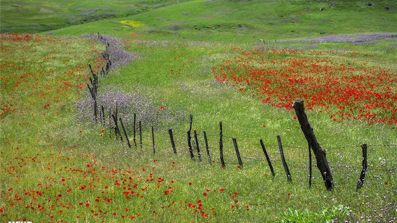 چگونه به سوباتان ،بهشت ییلاقی ایران سفر کنیم + عکسهای حیرتانگیز