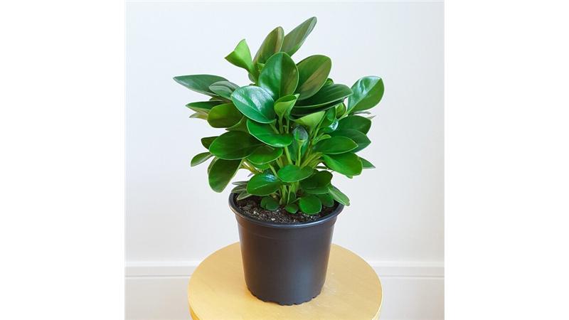 مناسبترین گل و گیاهها برای نگهداری در آپارتمان کدامها هستند