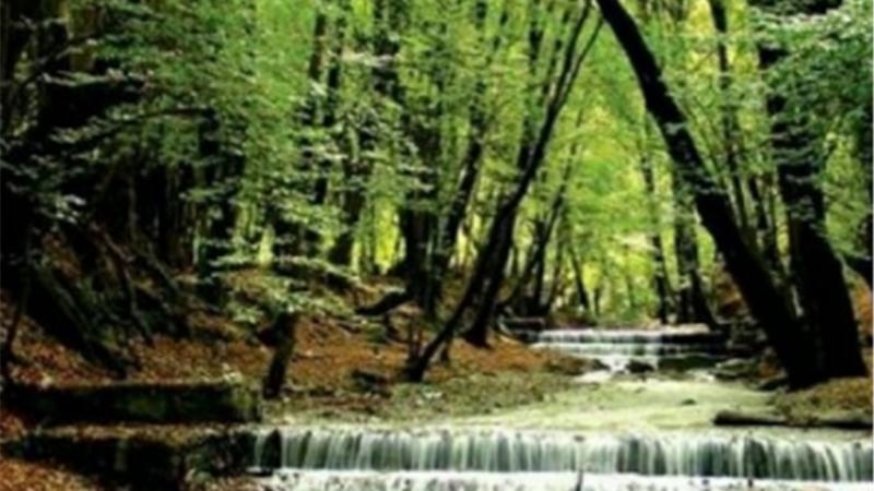 جنگل چهل چای کجا است و چگونه برویم