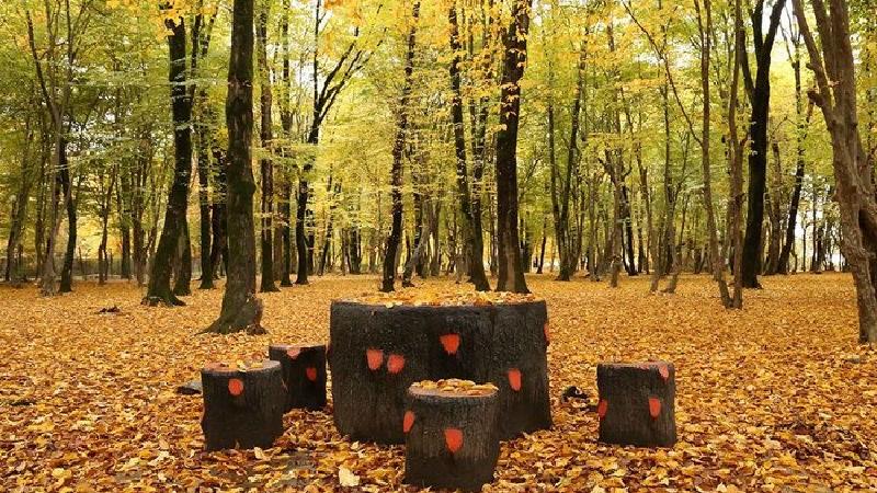 جنگل ناهارخوران یکی از بهترین مقصدها برای سفر پاییزی + راهنمای کامل سفر