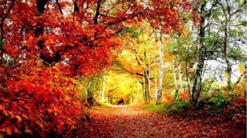 زیباترین عکسهای پروفایل پاییزی