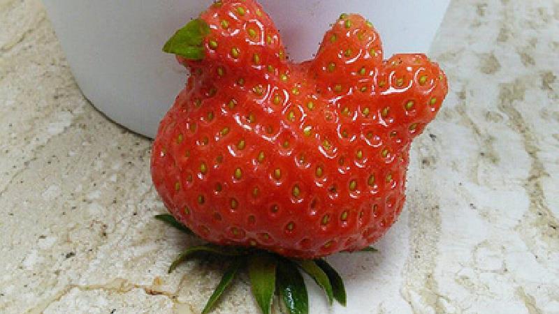 عجیبترین میوههای جهان را ببینید