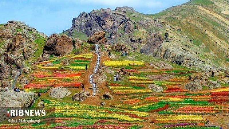 تصاویر بینظیر از دشت لالههای روستای کندر