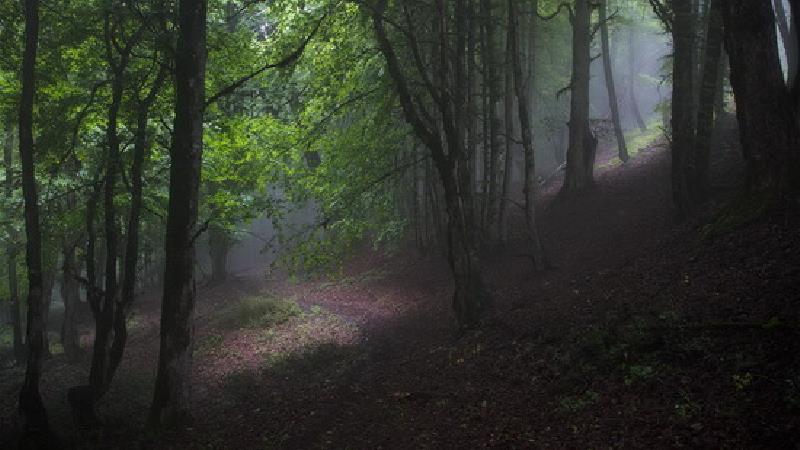 جنگل الیمستان کجا است و چگونه باید برویم