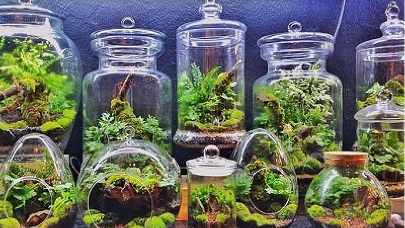 ساخت تراریوم، باغ شیشه ای ساده و شیک در منزل را یاد بگیرید