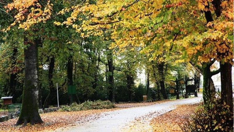 پارک جنگلی سیسنگان کجا است و چه دیدنی ها و تفریحاتی دارد